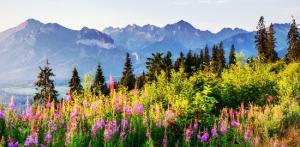 Kelionė Zakopanės kalnų kurortas ir didingos Lenkijos pilys