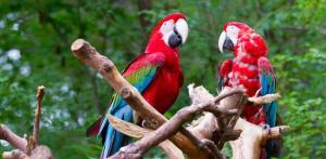 Kelionė Po Centrinę Ameriką: Nikaragva ir Kosta Rika