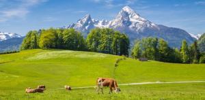 Kelionė Bavarijos, Austrijos ir Italijos Alpės 7d.