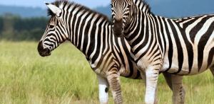 Kelionė Serengečio parkas - Brėmenas - Heidės parkas