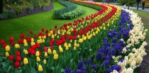 Kelionė Gėlių paradas Olandijoje ir gražiausi Belgijos miestai