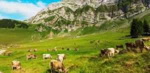Kelionė Smaragdinė Slovėnija ir kampelis Italijos