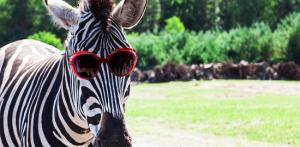 Kelionė Serengečio parkas - Legolendas - Heidės parkas