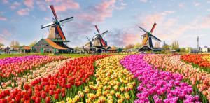 Kelionė Pavasarinių gėlių žydėjimas Europos soduose 5d.