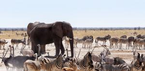 Kelionė Didysis turas: Namibija - Botsvana - Zambija (su lietuviškai kalbančiu vadovu)