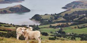Kelionė Pažintis su gražuole Naująja Zelandija