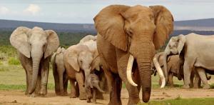 Kelionė Pietų Afrikos Respublika - Vaivorykštės keliu. Išskirtinis nuotykių turas kelionių gurmanams 17d.