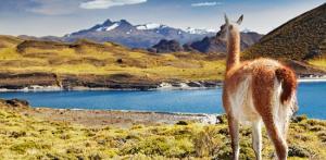 Kelionė Didžioji ekspedicija po Pietų Ameriką ir Okeaniją 20d. (su lietuviškai kalbančiu vadovu)