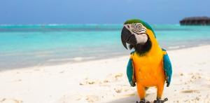 Kelionė 14 dienų KARIBŲ KRUIZAS, aplankant Jamaiką, Arubą, Kolumbiją, Panamą, Meksiką, Bahamus (su lietuviškai kalbančiu vadovu)