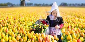 Kelionė Gėlių paradas Olandijoje – žydintys Europos sodai 5 d./4 n.