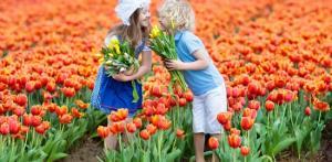 Kelionė Gražiausių Europos sodų spalvos. Olandija – Vokietija 5d./4n.