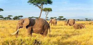 Kelionė Nuotykių safaris po Rytų Afriką: Kenija - Tanzanija, aplankant garsiausius šių šalių laukinės gamtos nacionalinius parkus ir rezervatus 11d.