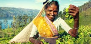 Kelionė Egzotiškoji Šri Lanka
