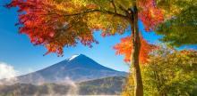 Kelionė Raudonais Momidzi klevų lapais nudažyta rudeninė Japonija