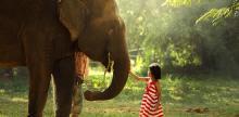 Kelionė Šri Lanka su poilsiu egzotiškame paplūdimyje (su lietuviškai kalbančiu vadovu)