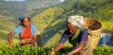Kelionė Šri Lanka: gražioji gamtos oazė