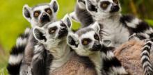 Kelionė Madagaskaro pietinė dalis