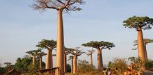 Kelionė Madagaskaras – stebuklų šalis