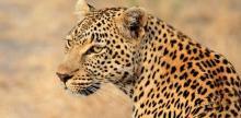 Kelionė Pietų Afrikos Respublika – didmiesčių ir laukinės gamtos namai (su vadovu iš Lietuvos)