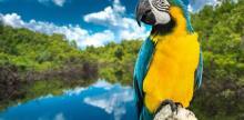 Kelionė Argentina ir Brazilija su Iguasu kriokliais ir poilsiu tropiniame kurorte (su grupe iš Lietuvos)