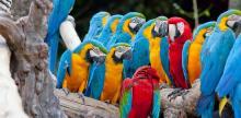 Kelionė Trumpa pažintis su Kosta Rika (su galimybe pratęsti poilsį)