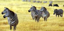 Kelionė Tanzanijos nacionaliniai parkai ir poilsis Zanzibare (su Dainiumi Kinderiu)