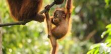 Kelionė Laukinė Malaizijos gamta su Borneo sala