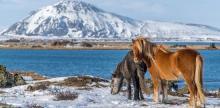 Kelionė Islandija: geizerių, vulkanų ir krioklių šalis (su Dainiumi Kinderiu)