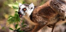 Kelionė Madagaskaras - Mėnulio sala (su vadovu iš Lietuvos)