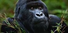 Kelionė Uganda - Ruanda (su vadovu iš Lietuvos)
