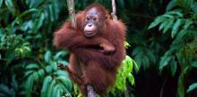 Kelionė Poilsis Borneo saloje (iš Rygos)