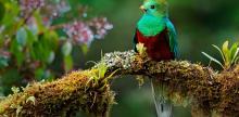 Kelionė Pažintis su spalvingąja Gvatemala (su vadovu iš Lietuvos)