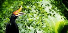 Kelionė Laukinė Malaizijos gamta su Borneo sala (su vadovu iš Lietuvos)