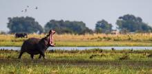 Kelionė Neatrastoji Botsvana