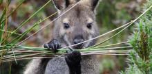 Kelionė Australijair neatrastoji Tasmanijos sala:didysis turas(su lietuviškai kalbančiu vadovu)