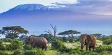 Kelionė Aukščiausia  Afrikos viršūnė Tanzanijoje – Marangu keliu