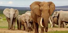Kelionė Pietų Afrikos Respublika - Vaivorykštės keliu 17d.