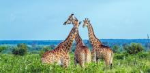 Kelionė Afrikos kaleidoskopas. PAR - Zimbabvė - Botsvana 14d.