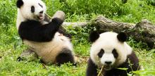 Kelionė Egzotiškoji Kinija, tingiosios pandos ir Honkongas (su lietuviškai kalbančiu vadovu) 2019 m. pavasaris