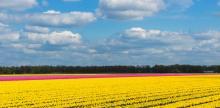 Kelionė Gėlių paradas Olandijoje (6d/5n)
