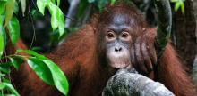 Kelionė Singapūras-Borneo sala: Džiunglių takais (su poilsiu)