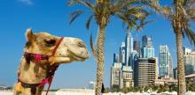 Kelionė Poilsinė kelionė: Jungtiniai Arabų Emyratai - Dubajus