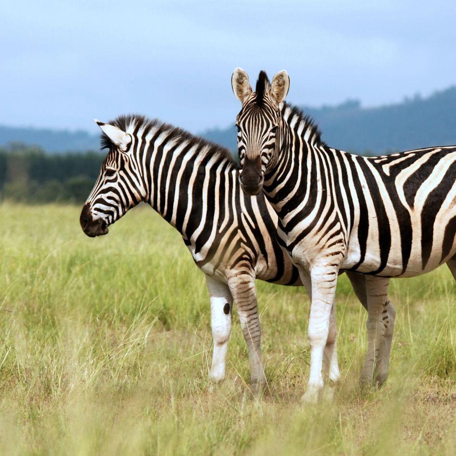 Serengečio parkas - Brėmenas - Heidės parkas