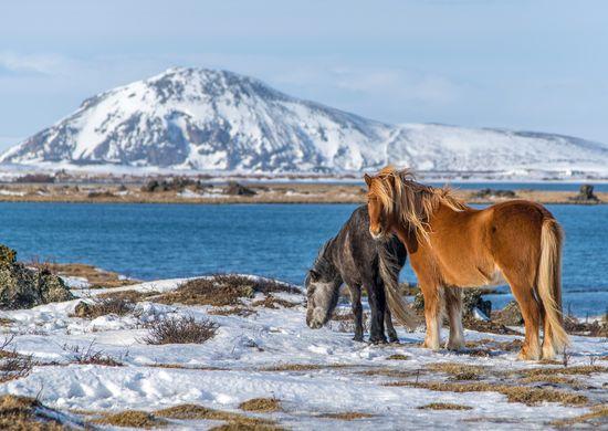 Islandija: geizerių, vulkanų ir krioklių šalis (su Dainiumi Kinderiu)