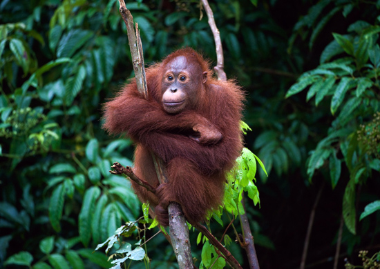 Poilsis Borneo saloje (iš Rygos)