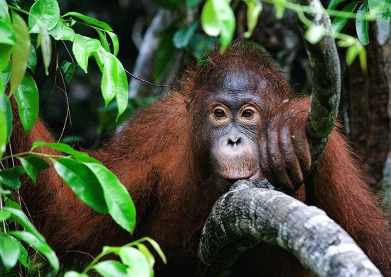 Singapūras-Borneo sala: Džiunglių takais (su poilsiu)