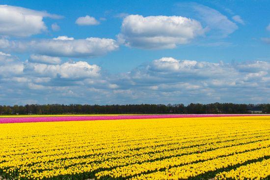 Gėlių paradas Olandijoje (6d/5n)