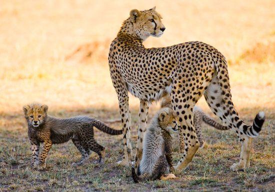 Heidės ir Serengečio safario parkai (5d/4n)