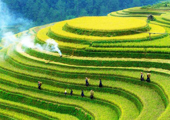 Visas Vietnamas su poilsiu (keliaujant individualiai)