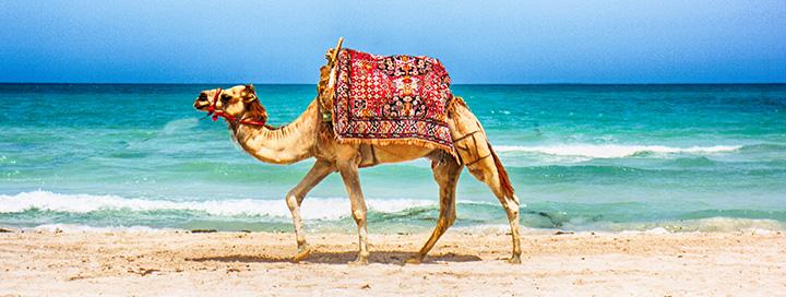 Mėgaukitės saule ir jūra TUNISE! Savaitės atostogos 4* viešbutyje SUNCONNECT DJERBA AQUA RESORT.